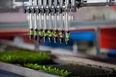 Mekaniska plantera plantor Royaltyfri Fotografi