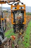 Mekaniskt beskära av växter i en vingård arkivfoton