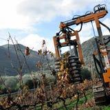 Mekaniskt beskära av växter i en vingård royaltyfri foto