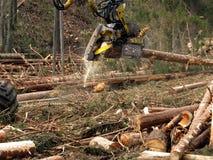 Mekaniskt klipp av träd i en skog royaltyfria foton