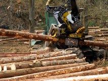 Mekaniskt klipp av träd i en skog royaltyfria bilder
