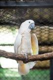 Mekaniskt säga efter all art som finnas i mest tropiska och mest subtropiska regio royaltyfri bild