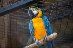 Mekaniskt säga efter all art som finnas i mest tropiska och mest subtropiska regio arkivbilder