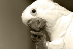 mekaniskt säga efter white fotografering för bildbyråer