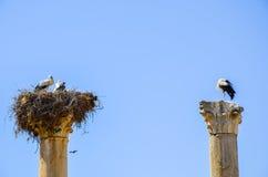 Meknes, Maroc 2 JUIN 2012 : Les cigognes nichent sur les colonnes des ruines romaines dans Volubilis, site de patrimoine mondial  image stock