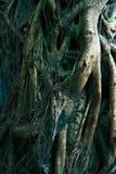 Mekong δέλτα, Βιετνάμ, ποταμός Στοκ εικόνα με δικαίωμα ελεύθερης χρήσης