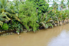 Mekong delta, Can Tho, Vietnam Royalty Free Stock Photo