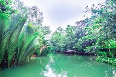 Mekong delta by Can Tho in Vietnam. View on Mekong delta by Can Tho in Vietnam Stock Image