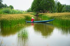 Mekong delta landscape with Vietnamese woman rowing boat on Nang - type of rush tree field, South Vietnam stock photos