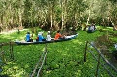Mekong Delta, Tra Su indigo forest, ecotourism royalty free stock photography