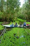 Mekong Delta, Tra Su indigo forest, ecotourism royalty free stock image