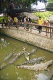 MEKONG DELTA, VIETNAM - MAJ 2014: Krokodillantgård Royaltyfri Bild