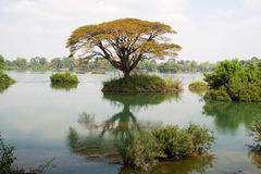 Mekong river Stock Photos