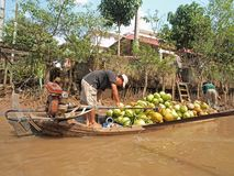 Mekong River, Coconut & Boat. Man selling coconuts on the Mekong River floating market. Ideal for writeup on activities on the Mekong River Royalty Free Stock Photo