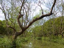Mekong River delta Vietnam Stock Photos