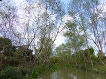 Mekong Rivier deltavietnam Royalty-vrije Stock Afbeelding