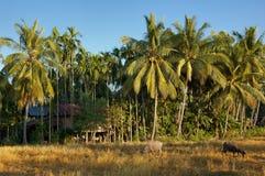 Mekong rivier - Eilanden Stock Afbeeldingen