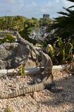 Meksyk, Riviera majowie, Tulum Obrazy Royalty Free