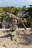 Meksyk, Riviera majowie, Tulum Obraz Royalty Free