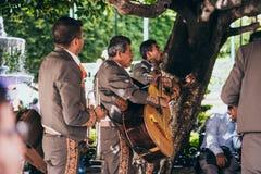 MEKSYK, WRZESIEŃ - 24: Mariachi skrzyknie spełnianie w parku, Se fotografia stock