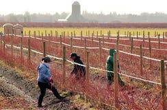 Meksykańscy robotnicy rolni w Waszyngton zdjęcia royalty free
