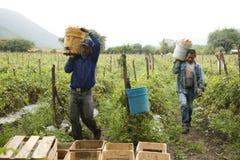 Meksykańscy rolnicy obraz royalty free
