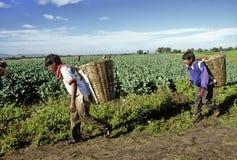 Meksykańscy rolnicy obrazy stock