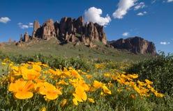 meksykański pola poppy zdjęcie royalty free