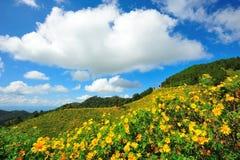Meksykański słońce kwiatu pole zdjęcia stock