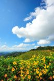 Meksykański słońce kwiatu pole obraz royalty free