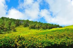 Meksykański słońce kwiatu pole zdjęcia royalty free