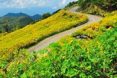 Meksykański słońce kwiatu pole obraz stock
