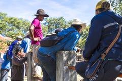 Meksykańskie bydło nabywcy obrazy royalty free