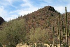 Meksykanin pustyni krajobraz Zdjęcia Stock