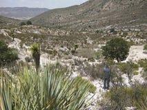 Meksykanin pustynia Zdjęcia Royalty Free