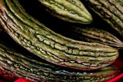 Melão amargo orgânico verde para a boa saúde imagens de stock royalty free