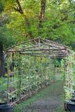Melão de inverno vegetal do berçário Imagens de Stock