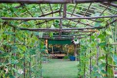 Melão de inverno vegetal do berçário Imagens de Stock Royalty Free