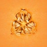 Melão do Cantaloupe para dentro fotos de stock