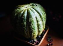 Melão verde maduro bonito em uma luz do dia foto de stock royalty free