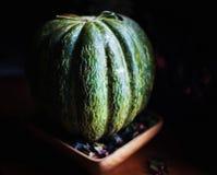 Melão verde maduro bonito em uma luz do dia imagens de stock