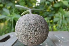 Melón /Cantaloupes de la roca fotografía de archivo