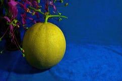Melón maduro amarillo en piso azul de la ropa Imagenes de archivo
