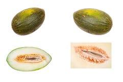 melón Verde-pelado Foto de archivo