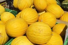 Melões amarelos maduros imagem de stock