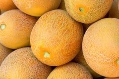 Melões do Cantaloupe foto de stock