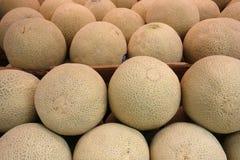 Melões do cantalupo Imagens de Stock