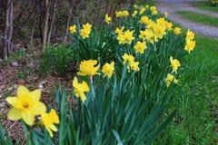 Mel amarelo brilhante para mamar flores imagem de stock