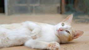 Mel de derramamento no limão fresco da fatia contra o gato preto do backgroundThe que vive no campo de Tailândia vídeos de arquivo