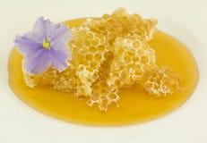 Mel nos favos de mel em um fundo branco Imagens de Stock